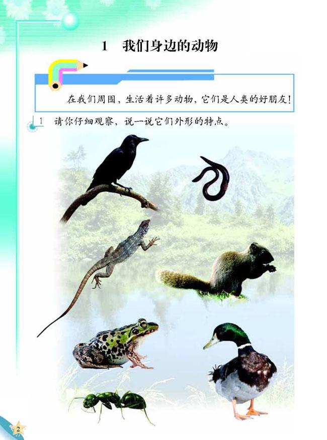 小学二年级科学上册1我们身边的动物