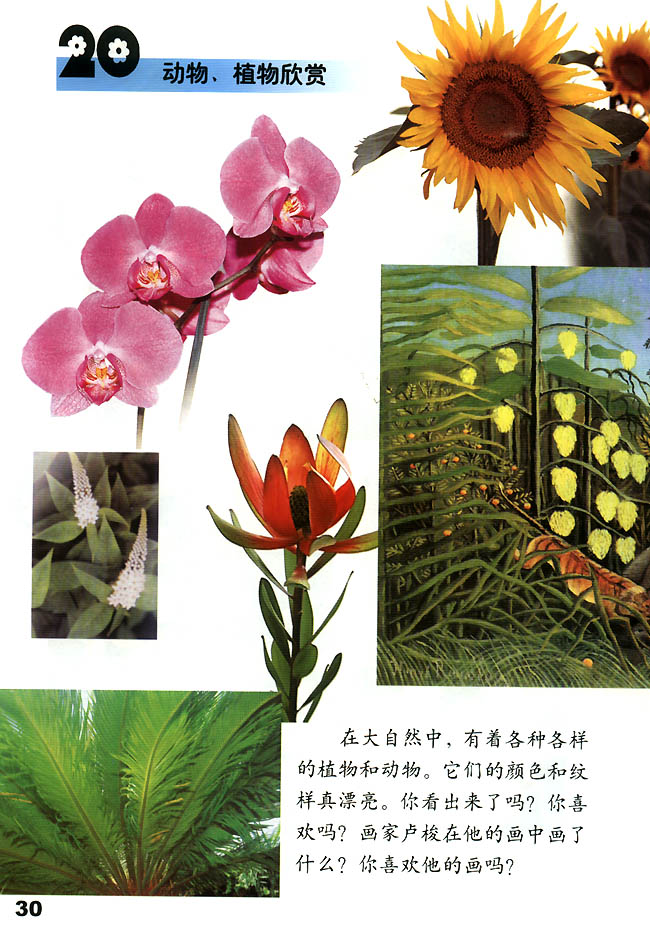 小学一年级美术上册20动物植物欣赏